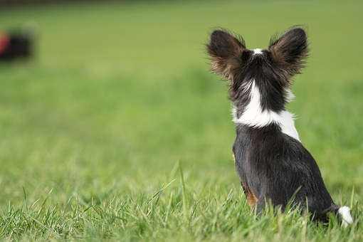 Top 10 Reasons Why People Love Small Dogs Breeds.